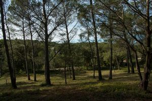 img_3499_pinede